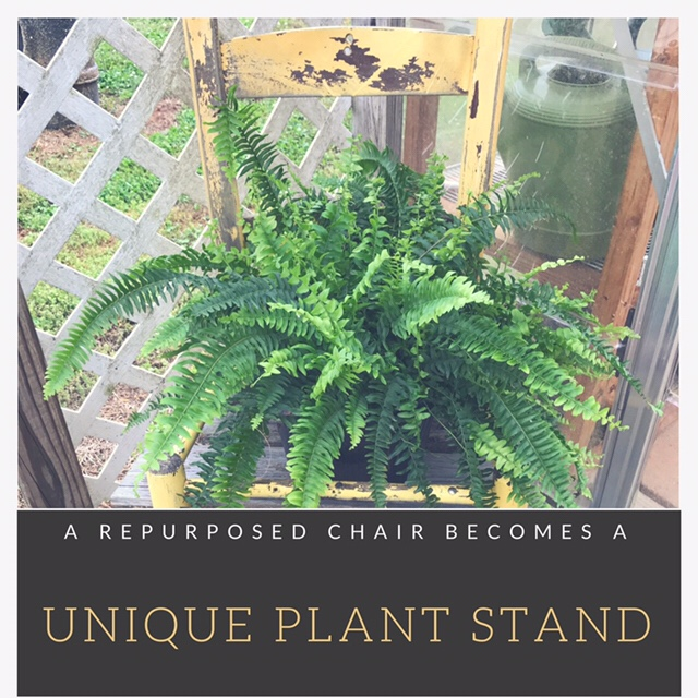 A repurposed chair becomes a unique plant stand